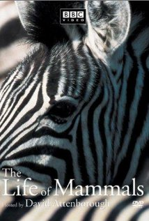 Watch The Life of Mammals Online