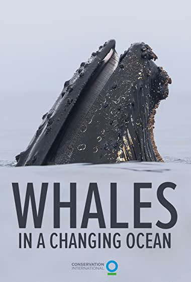Watch Whales in a Changing Ocean Online