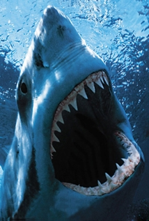 Movies about Sharks